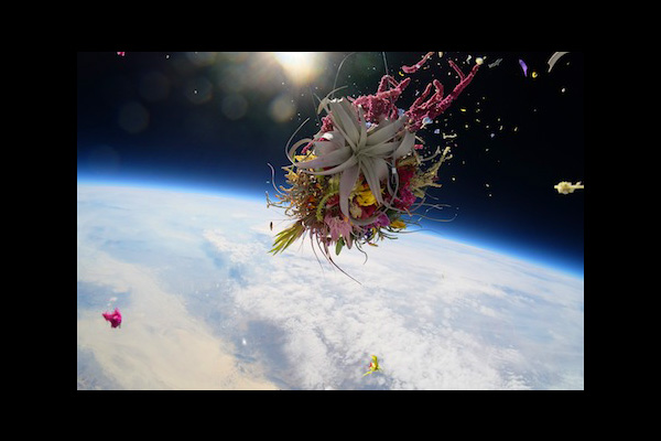 EXOBIOTANICA-flowers-web