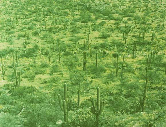 Saguaro Field, Tucson, Arizona